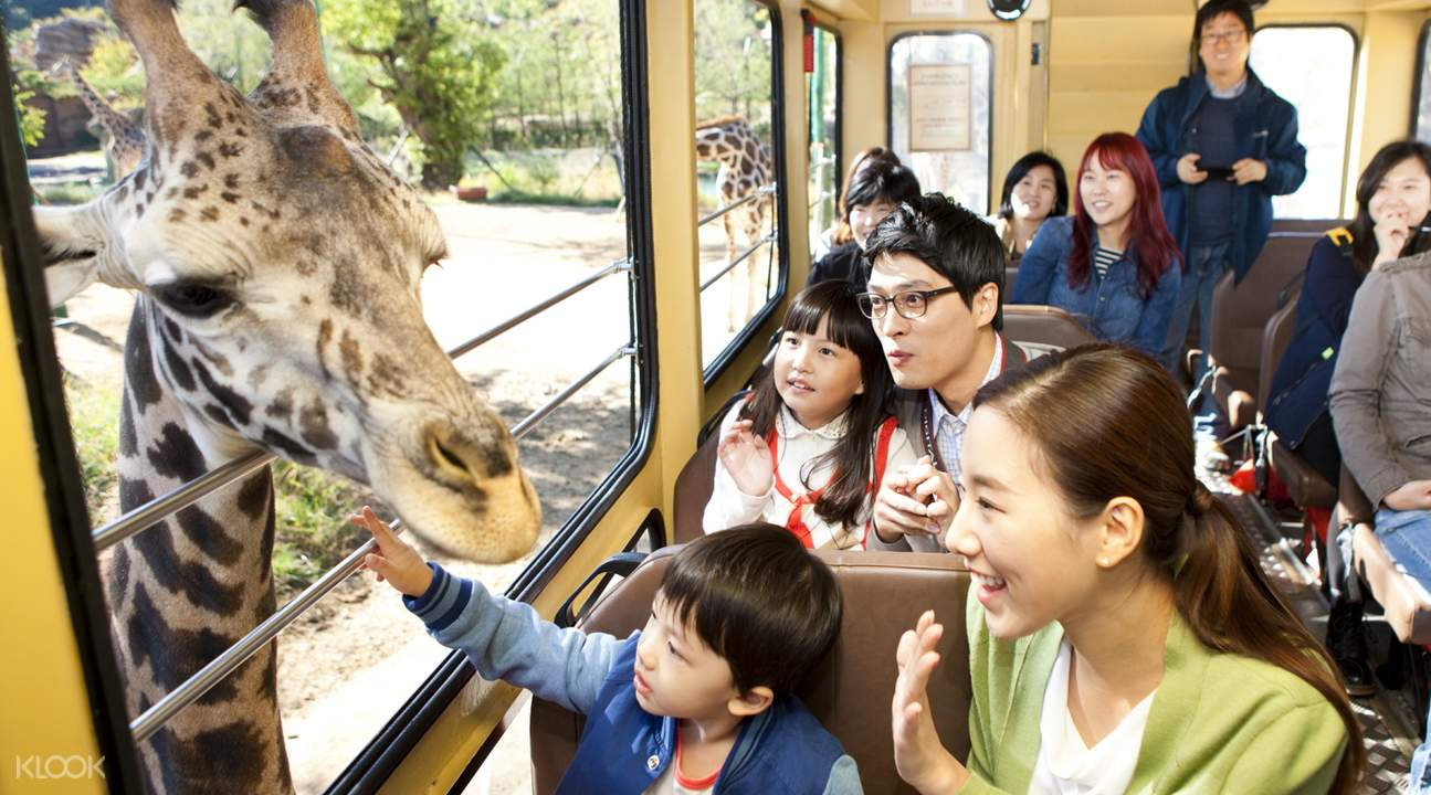 people on a tram with giraffe outside window